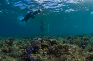 A diver operates our diver held stereo imaging system, collecting imagery to allow us to reliably generate high-resolution models of reef environments.