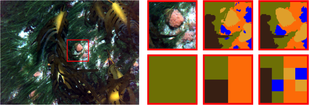 Classification of sub-image regions using superpixels vs square patches. (a) shows a sample image with a 100 × 100 pixel bounding box around a chosen region of interest, (b) shows a zoomed in view of the chosen region and (c) shows the class ground truth. (d) shows the classification possible with a superpixel / segmentation based approach and (e), (f) and (g) show the classification possible using non-overlapping square patches of size 100 × 100, 50 × 50 & 25 × 25 pixels, respectively