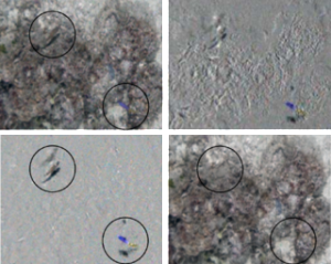 Using a 3D fan filter to isolate fish in a moving-camera sequence; top-left is an input frame; top-right is the result of naive pixel differencing: apparent motion due to camera motion is misinterpreted as as dynamic scene elements; bottom-left is the inverse fan filter output showing dynamic scene elements, and bottom-right is the fan filter output showing static scene elements.
