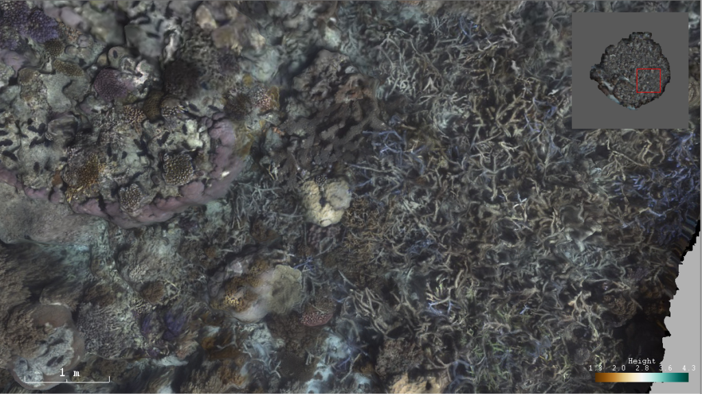 Details of the texture mapped 3D model of a portion of a reef at Lizard Island.