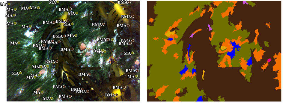 LEFT: example of annotated image scored using sparse random points. RIGHT: example of image classified using the system described here.