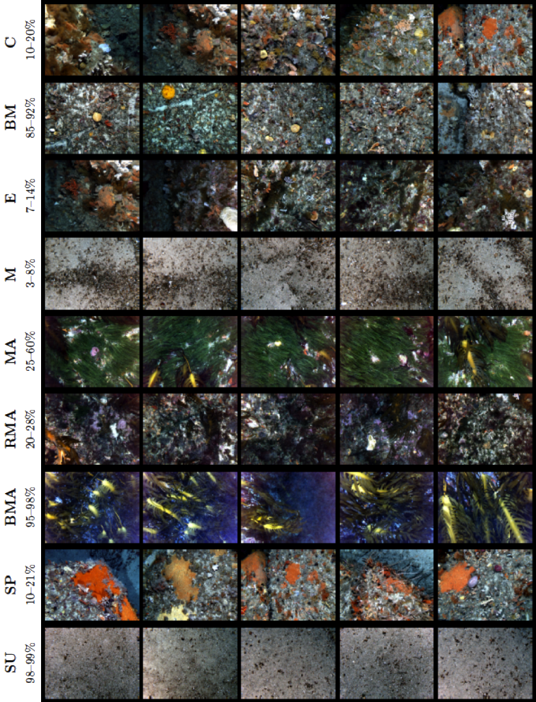 Non-overlapping unscored sample images for each class. Each row shows thumbnails of the 5 images that contain the highest proportion for each class. The figure also presents the range in percent cover across the images that are shown.